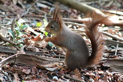 IMG_1907 (marianabmcruz) Tags: parquebiológicodegaia parquebiológico biologicalpark outdoors outdoor nature natureza animal animals fauna esquilo squirrel squirrels