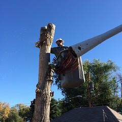 Tree removal (pr_things) Tags: landscaping retainingwall fabrication installation construction crane corten steel