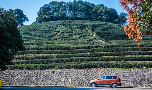 2016 - China - Hangzhou - Meijiawu Tea Culture Village - 1 of 5