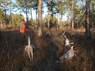 Alabama Luxury Quail Hunt - Guntersville 19