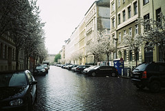 (jcarroza) Tags: road street trees flower building berlin film wet 35mm germany spring mitte prenzlauerberg 2012