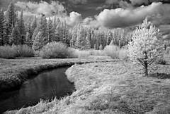 Trout Creek 6 (KeithAlanK) Tags: trees pine clouds ir tahoe infrared