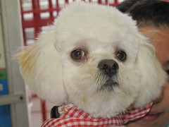 ,,,,,,,,,, 052 (Gioser_Chivas) Tags: dog animal can perro mascota mamifero vertebrado gioserchivas