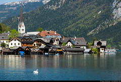 Hallstadt, Austria (Dmitry Rukhlenko Travel Photography) Tags: lake austria swan scenics hallstadt