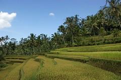 H_Gunung Kawi05a