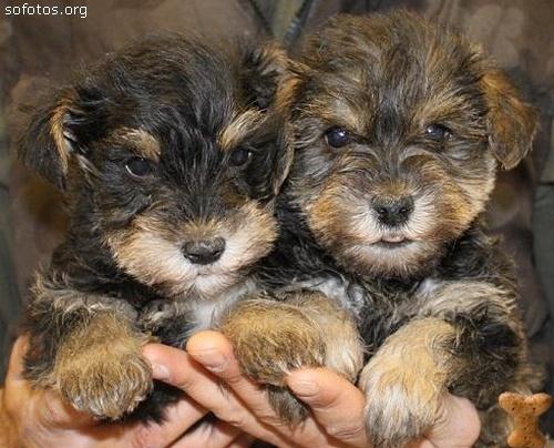 Filhotes de cachorros 66