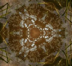 2013-08-21 09_54_22  Circle of Trees (Badger 23 / jezevec) Tags: county trees tree forest circle log experimental timber taiwan boom albero puu arbre strom baum cy aa fa tr sira puno treet trd pokok nantou koks drvo copac pohon drzewo mti medis arbore zuhaitz crann drevo 2013 rbol rvore pyebwa