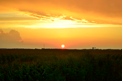 At Days End (Just Rich for now ..... :)) Tags: light sunset orange colors clouds landscape corn cornfield postcard photocontesttnc13