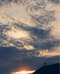 Sunset (jgimbitzki) Tags: sunset sky sun bird sol nature animal clouds photo foto natureza pssaro cu prdosol planet nuvens