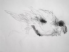 Vogel01 (Sophie Teunissen) Tags: pencil model drawing live charcoal modelling houtskool krijt potlood cont modeltekenen sibirisch
