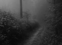 (Korim S. Loup) Tags: blackandwhite forest fanny loose iphone virela virela2 virela3 virela4 virela5 virela6 virela7 virela8 virela9 virela10