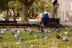 Naturalidad. (Manuelbv) Tags: parque natural gijón banco palomas señora
