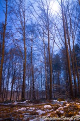 DSC08412 (christian speck) Tags: trees moon snow night forest 35mm outdoors schweiz switzerland suisse sony neige nuit foret abres sauvabelin rx1