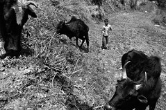 young shepherd (Perret pierre/ zounix / eye in motion) Tags: portrait people bw white mountain black monochrome nikon noir noiretblanc candid indian photojournalism melody dxo hindu blanc himachal regards reportage d90