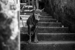 Favela Smiles (SFGauthier.com) Tags: world travel brazil bw dog bird rio brasil america work 35mm de landscape nikon janeiro south s f18 d300