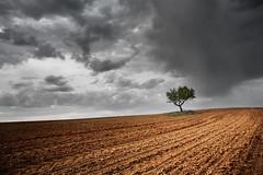Alone in the light (Rubén Toquero) Tags: tree luz canon arbol countryside alone cielo solo nubes campo arado palencia castillayleón sembrado erre ruhey rubéntoquerogonzález rubetoq