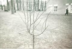 CSI Lone Tree Behind 1P.jpeg (MeganMcGibney) Tags: blackandwhite college statenisland scannedphoto cuny collegeofstatenisland