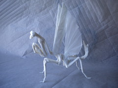 Mantis origami, extended wings (L_U_I_S) Tags: sculpture art architecture paper mantis insect arquitectura origami arte box geometry glue peacock escultura math mathematics papel cp boxed papiroflexia folding trigonometry insecto religiosa pleating pleat pseudempusa pinnapavonis
