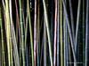 Bamboo (Nasdaqqq 20 photos) Tags: blinkagain dblringexcellence tplringexcellence eltringexcellence