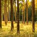 Wälder II