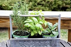 Rosemary, Basil & Sage (James0806) Tags: herbs sage rosemary basil