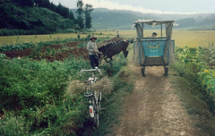 0988 Farmers at work , Yunnan Province , China (ngchongkin) Tags: china farmer cart yunnan fairplay musictomyeyes thegalaxy frameit flickraward flickrbronzeaward earthasia thebestofday gününeniyisi worldofdetails peopleenjoyingnature bestpeopleschoice theredgroup niceasitgets thelooklevel1red infinitexposure
