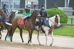 2015-05-21 (39) r3 Tyler Conner on #7 Atlantic Seaboard (JLeeFleenor) Tags: photos photography md pimlico marylandracing marylandhorseracing rain downpour weather jockey   jinete  dokej jocheu  jquei okej kilparatsastaja rennreiter fantino    jokey ngi horses thoroughbreds equine equestrian cheval cavalo cavallo cavall caballo pferd paard perd hevonen hest hestur cal kon konj beygir capall ceffyl cuddy yarraman faras alogo soos kuda uma pfeerd koin    hst     ko  maryland