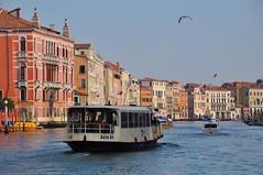 Venice (faungg's photos) Tags: city travel venice italy water buildings boat europe 城市 旅游 风光 waterbus 欧洲 意大利 威尼斯 travelon5photosaday