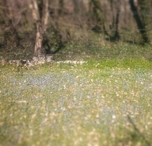 #violette di campo #homesweethome #Avezzano