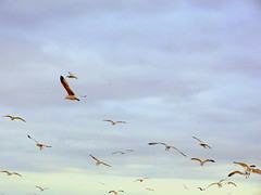 Winter Sky (dimaruss34) Tags: newyork brooklyn dmitriyfomenko image winter sky clouds manhattanbeach gulls