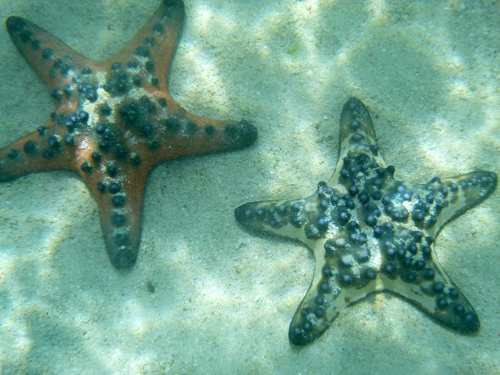 The World's Best Photos of island and starfish - Flickr Hive Mind