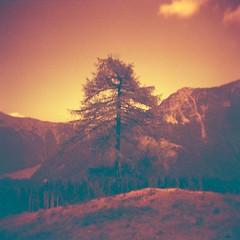 #lomo #lomolove #lomography #film #analoguephotography #ishootfilm #filmisnotdead #holga #redscale #monotone #igersfvg #fvglive #carnia #fvg #friuli #mountains #tree