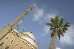 The  Mosque of Muhammad Ali, Cairo (Svetlana Polukhina) Tags: cairo egypt mosque citadel جامعمحمدعالى جامع مصر القاهرة قلعة نخلة palm каир египет мечетьмухаммедаали мечеть пальма muhammadali