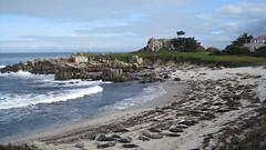 IMG_6112 (cheryl's pix) Tags: california pacificgrove pacificgroveca