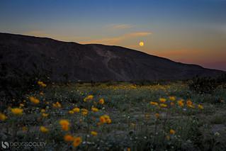 Full moon over Anza