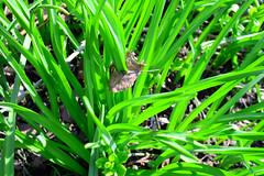 1PRO_4656 (Radu Pavel) Tags: nature spring grass green leaf radu pavel radupavel natur grün frühling blatt gras romania rumänien primavera naturaleza rumania yerba hierba verdor verdura verde hoja ©radupavelallrightsreserved ©radupaveltodoslosderechosreservados ©radupavelallerechtevorbehalten 2017 fotononstop colours farben colores