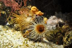 Acuqario di Genova (veryg83) Tags: acquariodigenova italia italy svoltastudenti fish pesci coralli coral underthesee infondoalmar