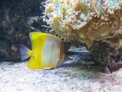 00734924 Aquarium Berlin 1 - 2017 (golli43) Tags: aquariumberlin zoo fische krokodile quallen wasser wasserpflanzen amphibien insekten unterwasserwelt