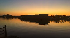 Golden Florida (Thanks for over 2 million views!!) Tags: chadsparkesphotography centralflorida sky sunlight sunrise sevenseaslagoon silhouettes water waltdisneyworld wdw disney disneyworld disneyspolynesianvillageresort disneyspolynesianresort contemporaryresort disneyscontemporaryresort reflections