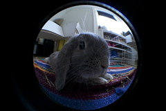 Playing with fisheye (roweec) Tags: bunny experiment fisheye flopped