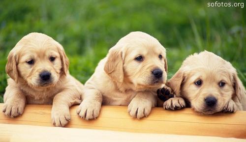 Filhotes de cachorros 48