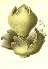 Anglų lietuvių žodynas. Žodis star earthball reiškia žvaigždė žemės drebėjimas lietuviškai.
