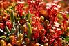 Flowers in Şavşat (rifatovic) Tags: nature canon turkey village türkiye blacksea karadeniz artvin pontus şavşat canon450d canonrebelxsi canonefs1585mmf3556isusm