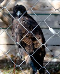 IMG_3443 (EadaoinFlynn) Tags: bird castle slovakia predator spis