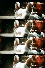 (Karla Vizone) Tags: parque red brazil dog green brasil lomo lomography supersampler sampler super curitiba grama cachorro pr parana passeio publico orelhas