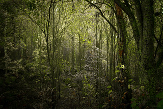 Poison Green Forest