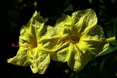 (Victoria.....a secas.) Tags: leica flores macro