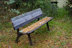 Take a sit... (Efkan Sinan) Tags: autumn fall nature sonbahar gz