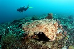 Raja Ampat - Manta Sandy (cathm2) Tags: travel indonesia underwater scuba diving rajaampat waigeo mantasandy arenui
