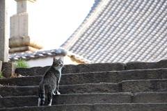 cat (Yodoba) Tags: winter japan stone port cat shrine stairway hiroshima neko  tomo